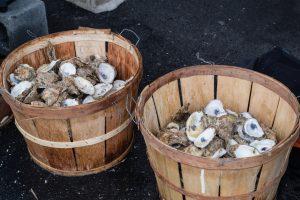oyster bushels